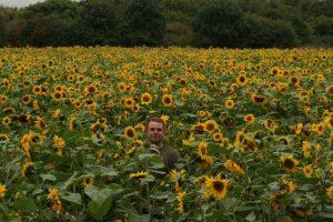 A-maze-ing Sunflowers